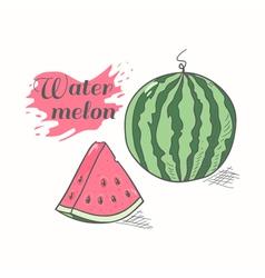 Juicy watermelon with slice vector image