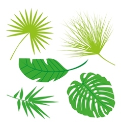 Tropical leaves collection isolate  set vector