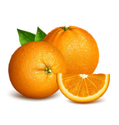 Whole ripe oranges and slices vector