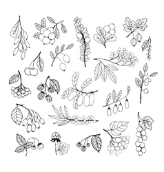 Set of garden and wild hand-drawn sketch berries vector
