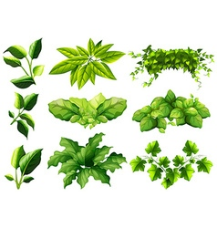 Different kind of leaves vector
