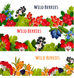 Banners set of wild berries and ruits vector