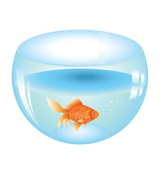 Gold fish in aquarium vector
