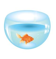 Gold Fish in Aquarium vector image