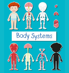 little boy and body system poster vector image vector image