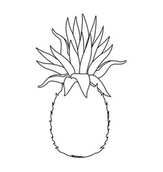 pineapple tropical exotic fruit tasty vector image vector image