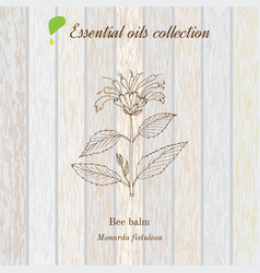 Pure essential oil collection bee balm wooden vector