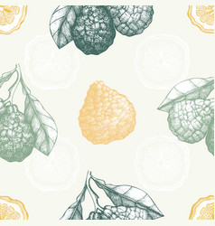 Seamless pattern with ink hand drawn bergamot vector