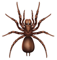 Sydney funnel-web spider vector