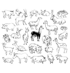 wild animals zoo set hand-drawn vector image vector image
