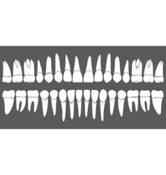 Set of human teeth dental template vector