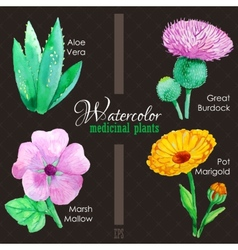 Set of watercolor madicinal plants vector image