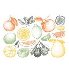 Vintage citrus fruits collection vector