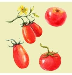 Watercolor tomato set vector