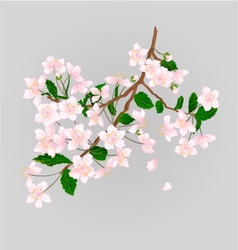 Wild cherry branch natural background vector