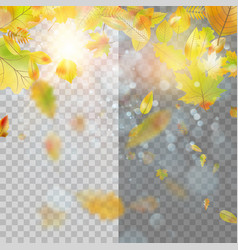 autumn concept template with copy space eps 10 vector image vector image