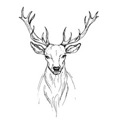 Sketch by pen head noble deer front view vector