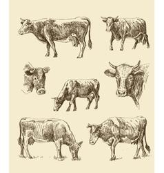 Cows hand draw sketch vector