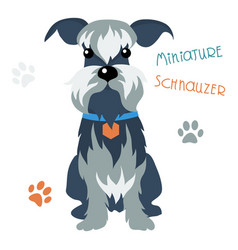 miniature schnauzer dog vector image vector image