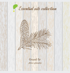 Pure essential oil collection grand fir wooden vector