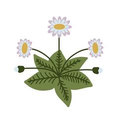 Decorative isolated daisy vector