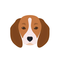 lovely head bearded dog beagle vector image vector image