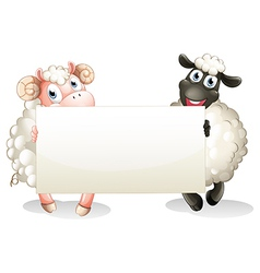 Two sheeps holding an empty banner vector image