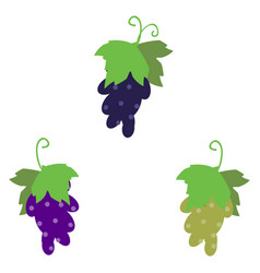 Grape cluster isolated on white vector