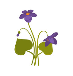 Violets bunch isolated on white close up vector