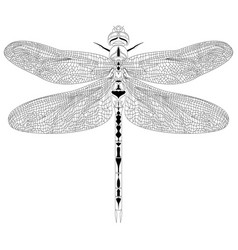Elegant dragonfly insect detailed sketch in black vector