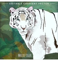 Wild Cats White Tiger vector image