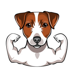 Jack russell terrier with muscule vector