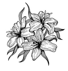 lily flower engraving style vector image vector image