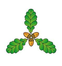 three acorns and oak leaves vector image