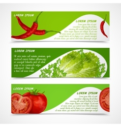 Vegetables banners horizontal vector