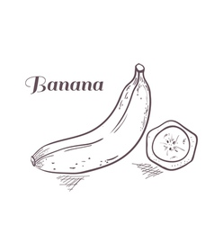 Engraved banana with slice vector image vector image