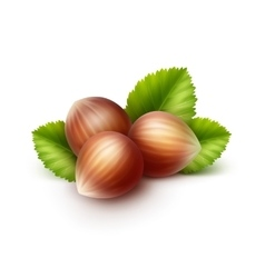 Full unpeeled hazelnuts with leaves isolated vector