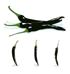 Pasilla chilechile negrohot chili pepper vector
