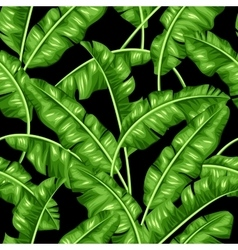 Seamless pattern with banana leaves image of vector