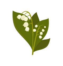 Twigs of close up lily of the valley isolated vector
