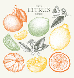 Vintage citrus fruits collection vector