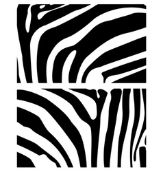 Background zebra vector
