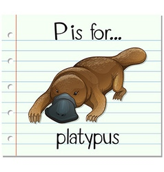 Flashcard letter p is for platypus vector