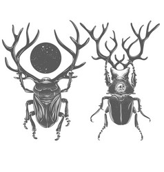 Hand drawn beetles black and white insects vector