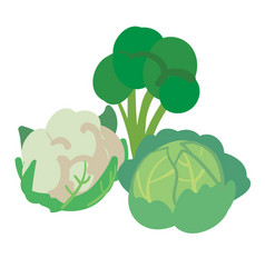 three different kinds of cabbage isolated on white vector image vector image