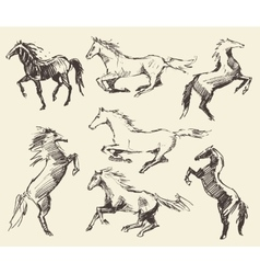 Set hand drawn horses sketch vector image