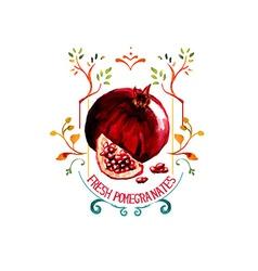 Pomengranate watercolor vector