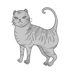 British shorthair icon in monochrome style vector