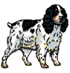 english cocker spaniel vector image vector image