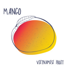 hand drawn mango fruit icon vector image